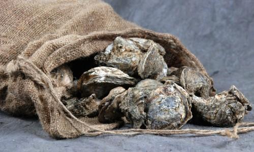 oystersoutofsackweb