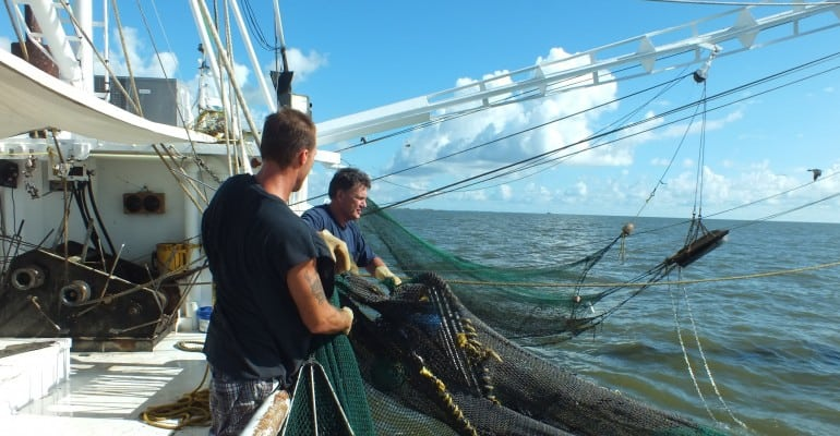 Shrimper James Blanchard pulling in shrimp net