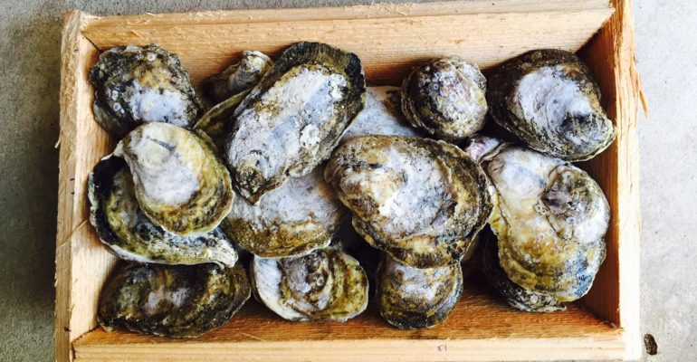 Raw oysters in wooden crate