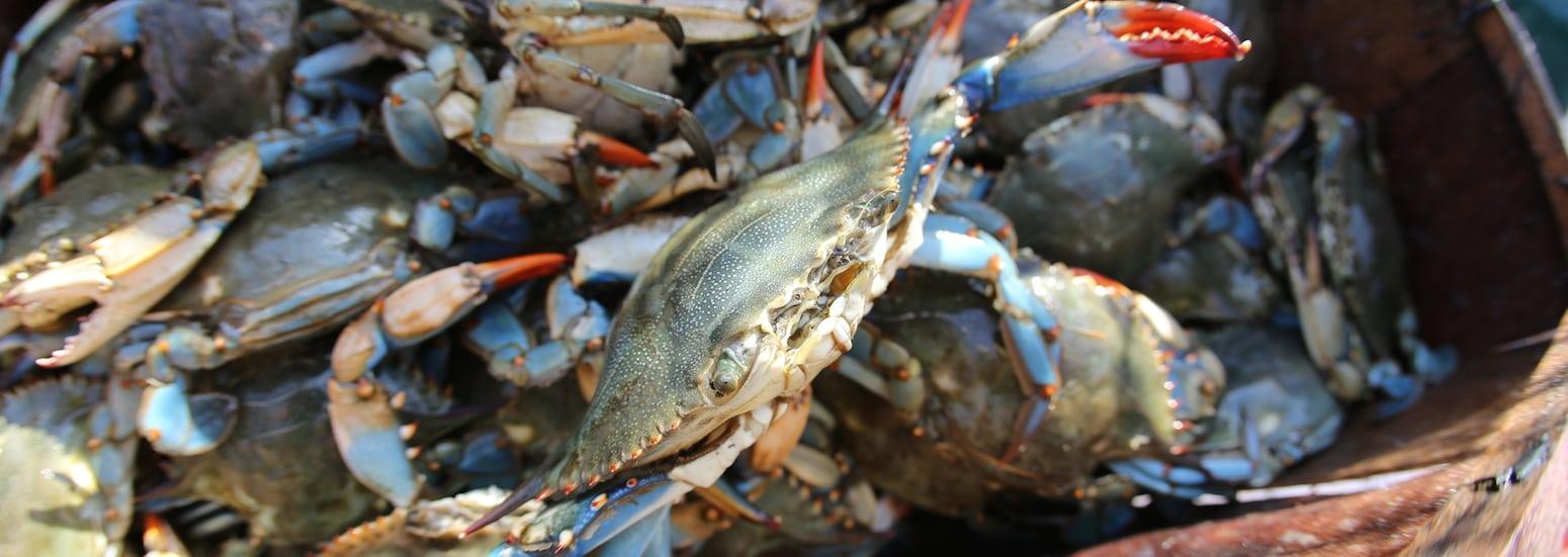 crabescaping-slider