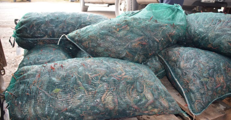 several sacks of crawfish on palette